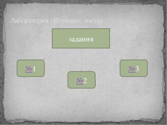 задания Лаборатория «Изучение листа» №1 №2 №3