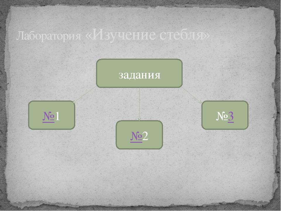 Лаборатория «Изучение стебля» задания №1 №2 №3