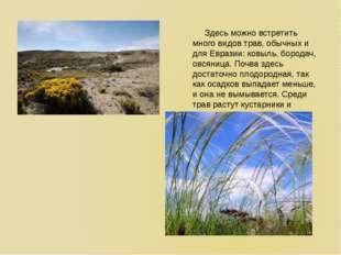 Здесь можно встретить много видов трав, обычных и для Евразии: ковыль, бород