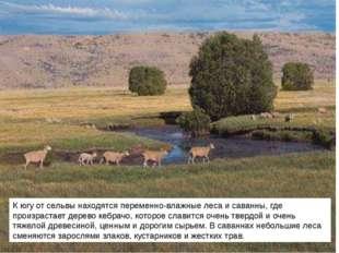 К югу от сельвы находятся переменно-влажные леса и саванны, где произрастает