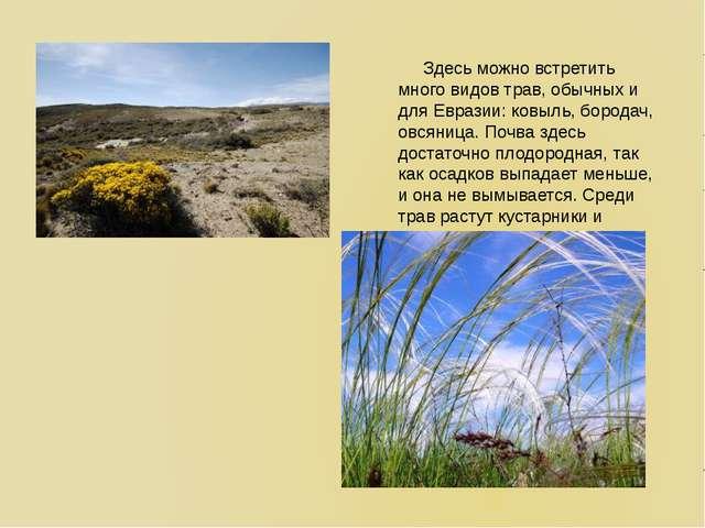 Здесь можно встретить много видов трав, обычных и для Евразии: ковыль, бород...