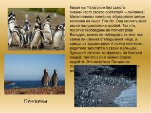 Какая же Патагония без самого знаменитого своего обитателя – пингвина! Магелл