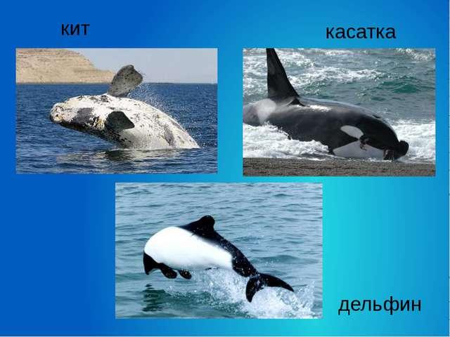 кит касатка дельфин