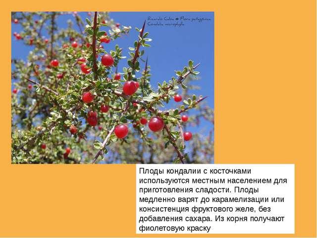 Плоды кондалии с косточками используются местным населением для приготовления...