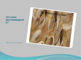Что такое растениеводство?  Растениеводство – наука о разведении культурных