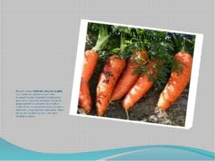 Весной семена моркови, свеклы, редиса сеют прямо на грядки и тщательно полив