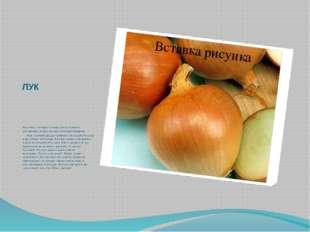 ЛУК Растения, у которых в пищу употребляются утолщенные корни, называются кор