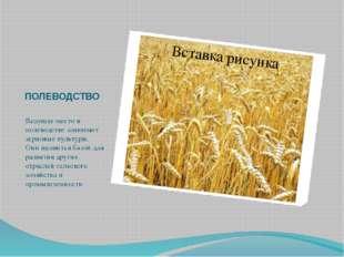 ПОЛЕВОДСТВО Ведущее место в полеводстве занимают зерновые культуры. Они являю