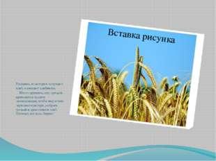 Растения, из которых получают хлеб, называют хлебными.  Много времени, си
