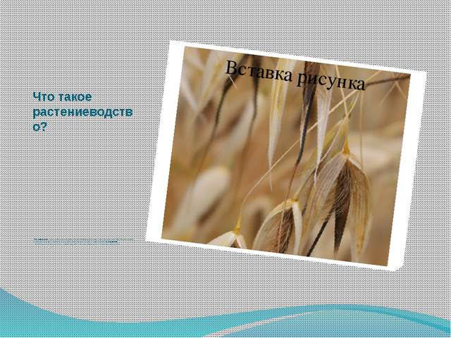 Что такое растениеводство?  Растениеводство – наука о разведении культурных...