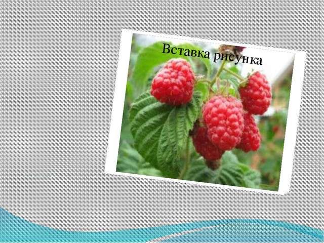 Садоводство сосредоточено на юге края и в пригородах Перми, Краснокамска, О...