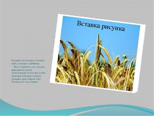 Растения, из которых получают хлеб, называют хлебными.  Много времени, си...