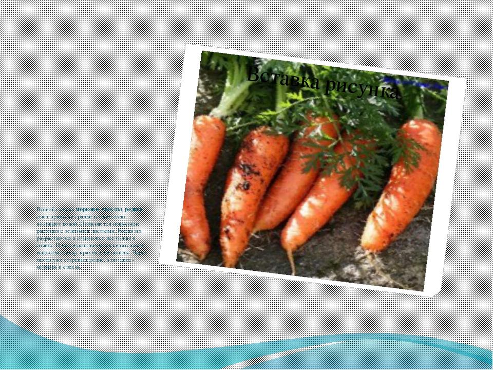 Весной семена моркови, свеклы, редиса сеют прямо на грядки и тщательно полив...