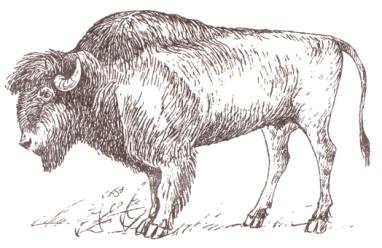 Охота 357