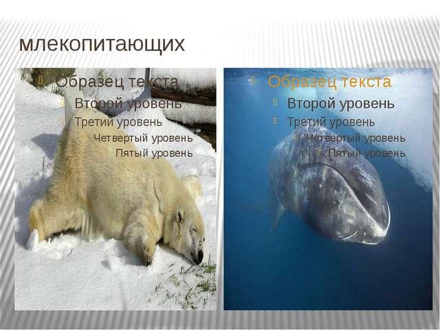 млекопитающих