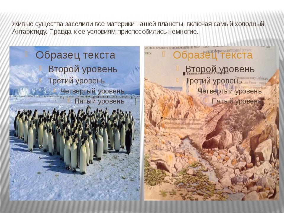 Живые существа заселили все материки нашей планеты, включая самый холодный –...