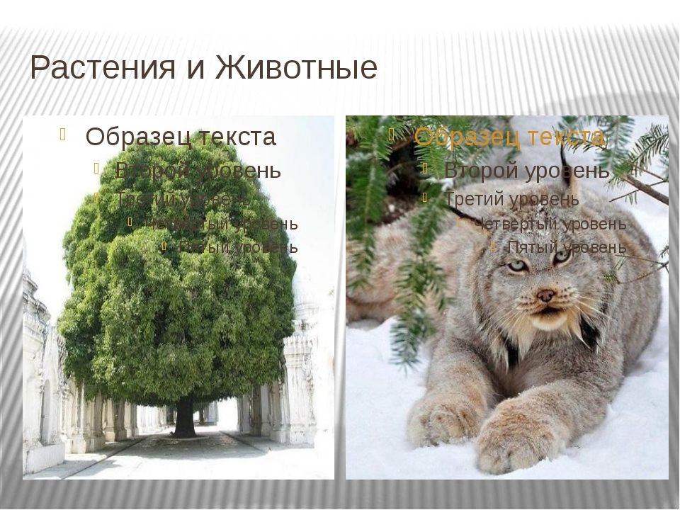 Растения и Животные
