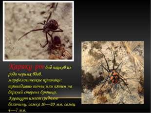 Караку́рт вид пауков из рода черных вдов. морфологические признаки: тринадца
