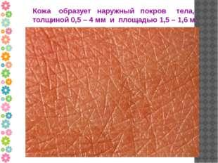 Кожа образует наружный покров тела, толщиной 0,5 – 4 мм и площадью 1,5 – 1,6 м.