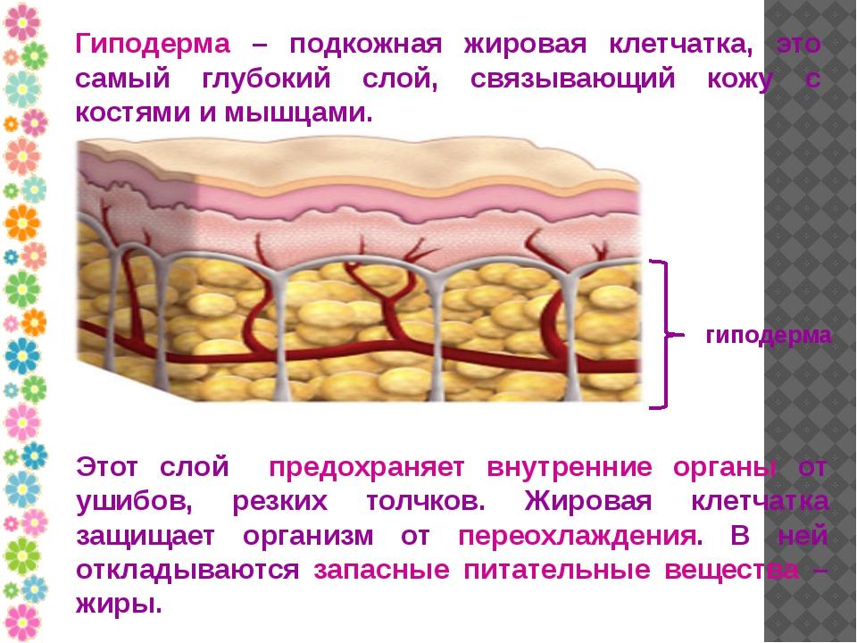 zhirovaya-prosloyka-vo-vlagalishe