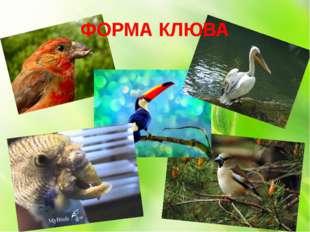 ФОРМА КЛЮВА