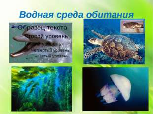 Водная среда обитания