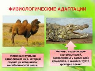 ФИЗИОЛОГИЧЕСКИЕ АДАПТАЦИИ Животные пустыни накапливают жир, который служит им