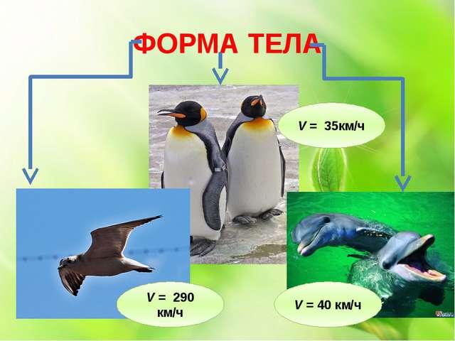 ФОРМА ТЕЛА V = 290 км/ч V = 35км/ч V = 40 км/ч