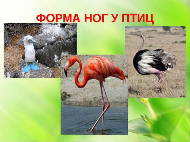 ФОРМА НОГ У ПТИЦ