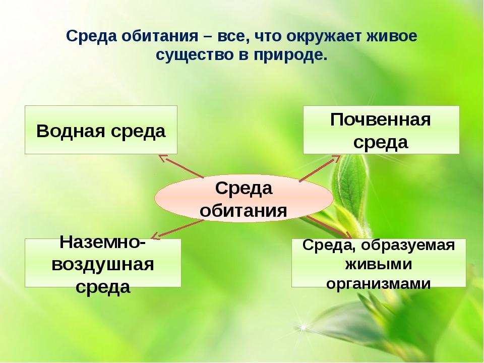 Среда обитания – все, что окружает живое существо в природе. Среда обитания В...