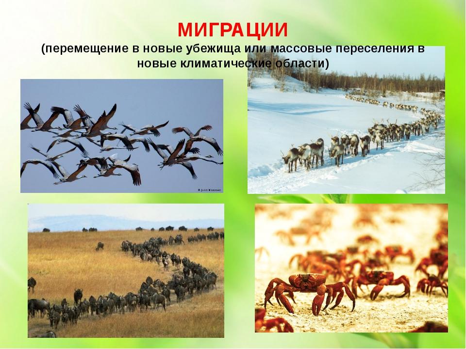 МИГРАЦИИ (перемещение в новые убежища или массовые переселения в новые климат...