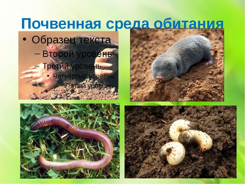 Почвенная среда обитания