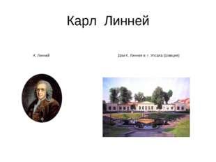 Карл Линней К. ЛиннейДом К. Линнея в г. Упсала (Швеция) К. ЛиннейДом К. Ли