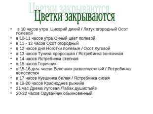 в 10 часов утра Цикорий дикий / Латук огородный Осот полевой в 10-11 часов