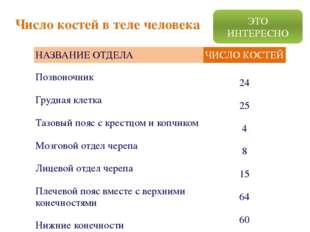 Число костей в теле человека ЭТО ИНТЕРЕСНО НАЗВАНИЕ ОТДЕЛА ЧИСЛО КОСТЕЙ Позво