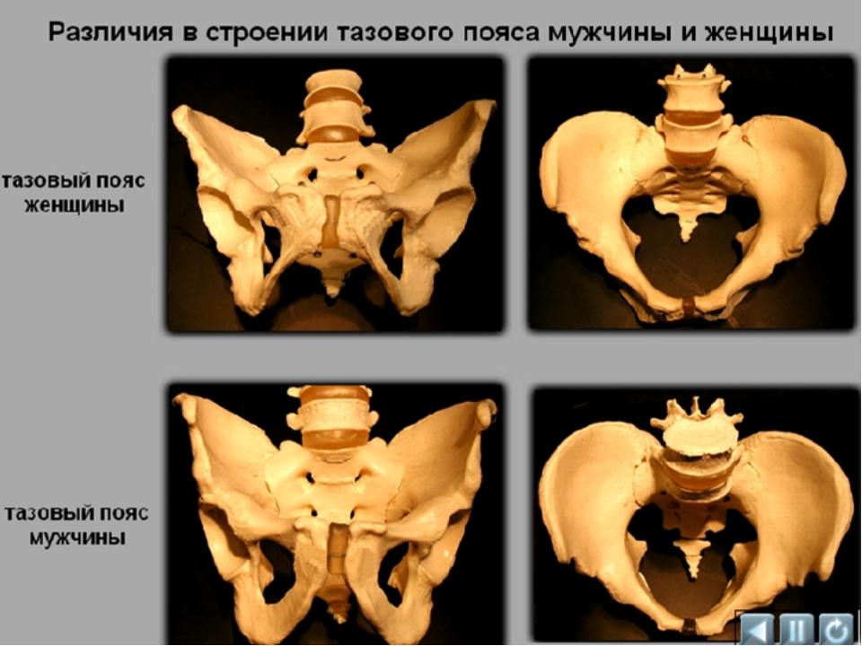 Заполнить таблицу Мозговой отдел = лобная кость+2 теменные + затылочная + 2 в...