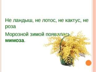 Не ландыш, не лотос, не кактус, не роза Морозной зимой появилась мимоза. Кар