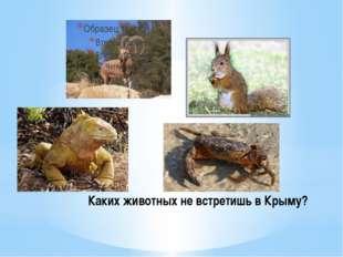 Каких животных не встретишь в Крыму?