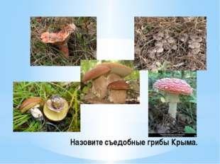 Назовите съедобные грибы Крыма.