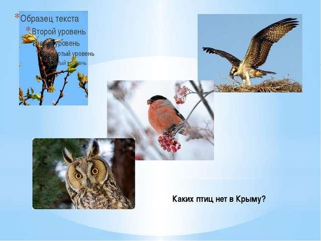 Каких птиц нет в Крыму?