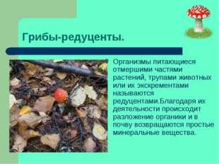 Грибы-редуценты. Организмы питающиеся отмершими частями растений, трупами жив