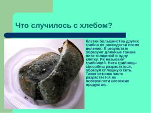 Что случилось с хлебом? Клетки большинства других грибов не расходятся после