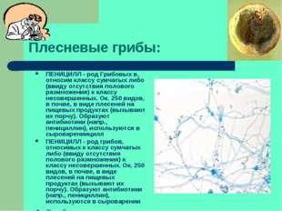 Плесневые грибы: ПЕНИЦИЛЛ - род Грибовых в, относим классу сумчатых либо (вви