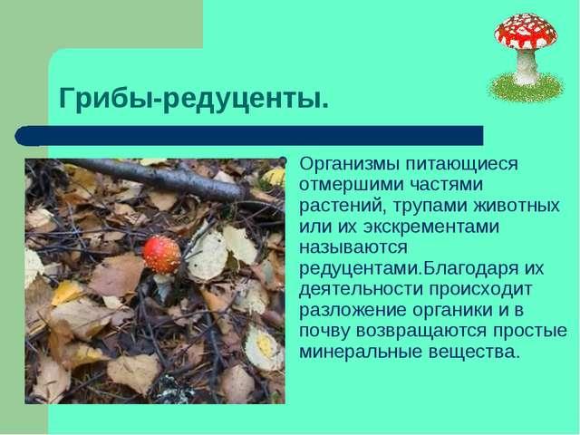 Грибы-редуценты. Организмы питающиеся отмершими частями растений, трупами жив...