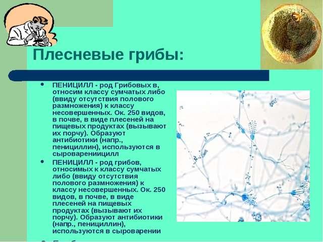 Плесневые грибы: ПЕНИЦИЛЛ - род Грибовых в, относим классу сумчатых либо (вви...