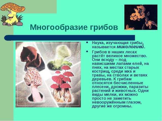 Многообразие грибов Наука, изучающая грибы, называется микологией. Грибов в...