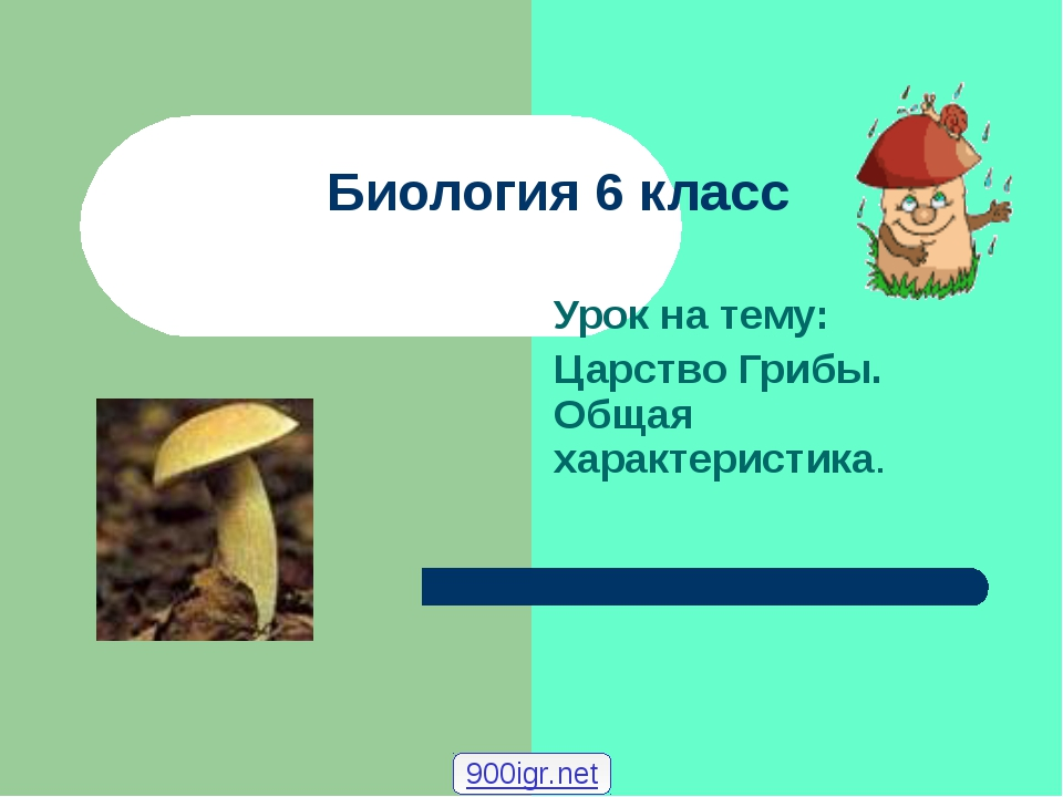 Биология 6 класс Урок на тему: Царство Грибы. Общая характеристика. 900igr.net
