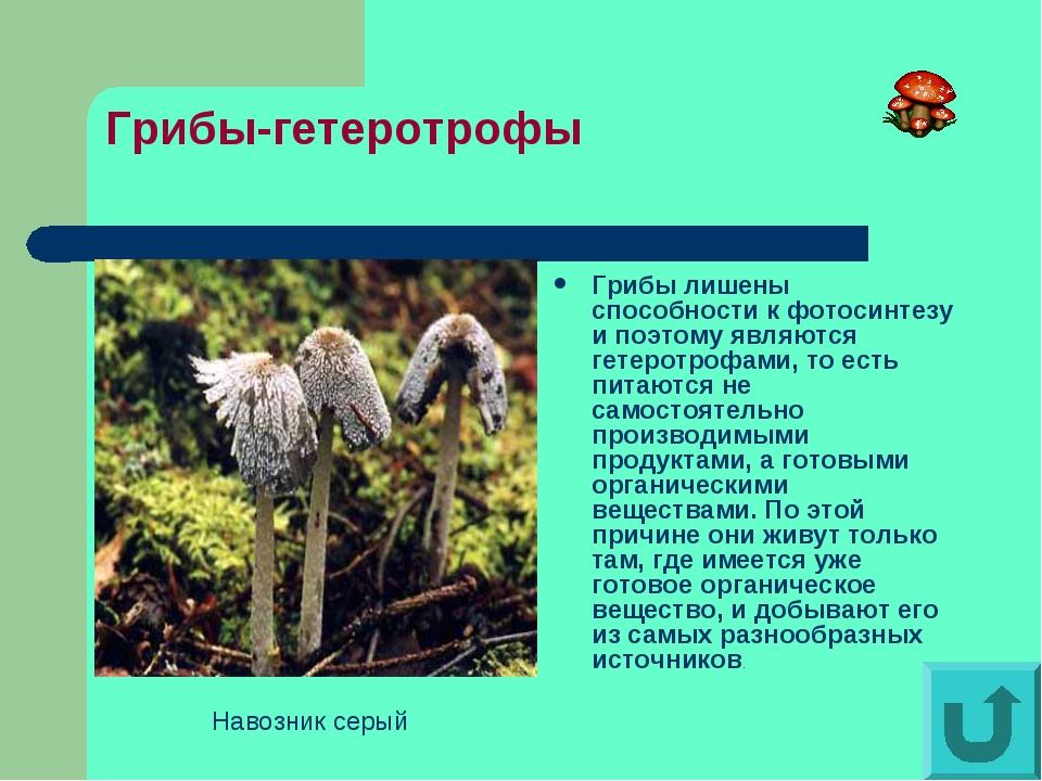 Грибы-гетеротрофы Грибы лишены способности к фотосинтезу и поэтому являются г...