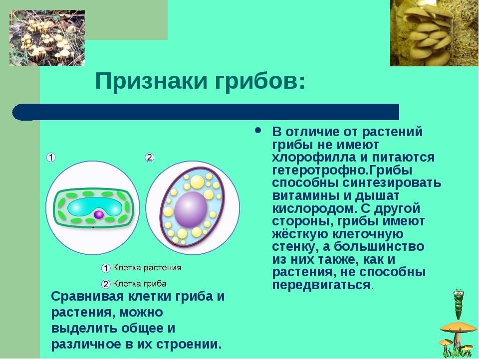 Признаки грибов: В отличие от растений грибы не имеют хлорофилла и питаются...