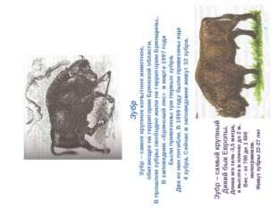 Зубр Зубр – самое крупное копытное животное, обитающее на территории Брянской